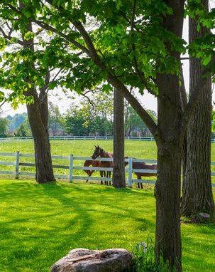 Farmhouse Collingwood outdoor